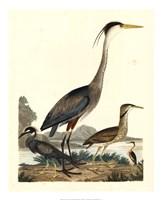 Heron Family I Giclee