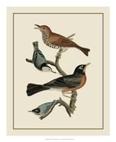 Bird Family I Giclee