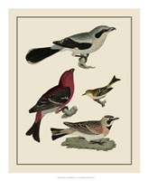 Bird Family II Giclee