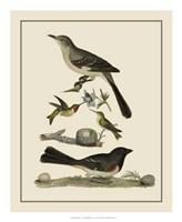 Bird Family V Giclee