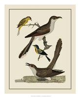 Bird Family VI Giclee