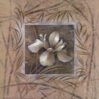 Spa Iris Fine-Art Print