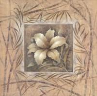 Spa Lily Fine-Art Print