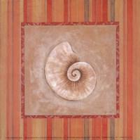 Citrus Shell IV Fine-Art Print