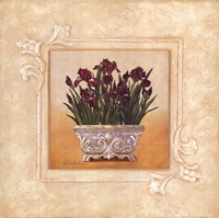 Red Irises Fine-Art Print