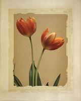 Tangerine Tulips I Fine-Art Print
