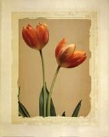 Tangerine Tulips II Fine-Art Print