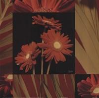 Crimson Gerberas Fine-Art Print