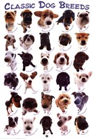 Dog Breeds Wall Poster