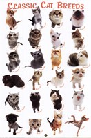 Cat Breeds Fine-Art Print