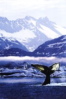 Humpback Whale Tail in Arctic Fine-Art Print