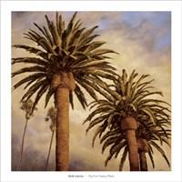Fog Over Canary Palms Fine-Art Print