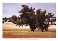 Montpellier Oak Fine-Art Print
