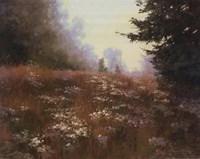 Septembers Wild Asters Fine-Art Print