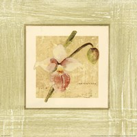 Exotic Floral IV Fine-Art Print