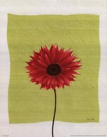 Pretty Daisy Fine-Art Print
