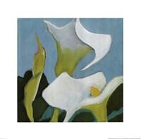 Calla Lillies 4 Fine-Art Print