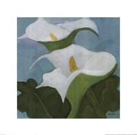 Calla Lillies 5 Fine-Art Print