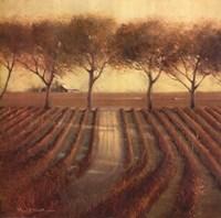 Vintage Sunlit Vineyard Fine-Art Print