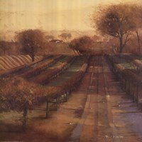 Vineyard Vista Fine-Art Print