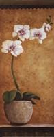 Hanna's Orchids I - mini Fine-Art Print