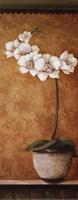 Hanna's Orchids II - petite Fine-Art Print