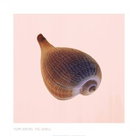 Fig Shell Fine-Art Print