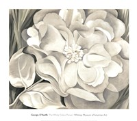 The White Calico Flower, 1931 Fine-Art Print