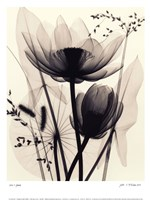 Lotus and Grasses Fine-Art Print