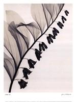 Solomons Seal Fine-Art Print