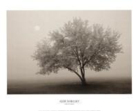 Forever Spring Fine-Art Print