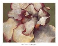 White Begonia Fine-Art Print