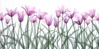 Floral Delight II Fine-Art Print