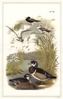 Ducks Fine-Art Print