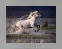 Aquatic Gallop Fine-Art Print