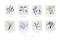 8 Herbs Fine-Art Print