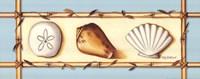 Seashells Fine-Art Print