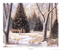 Cedar Sunday Fine-Art Print