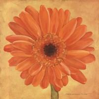 Orange Gerber Fine-Art Print