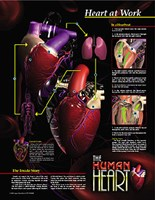 Heart At Work Fine-Art Print