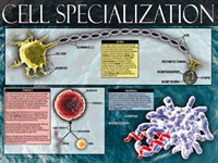 Cell Specialization Fine-Art Print