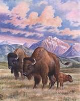 Bison Fine-Art Print