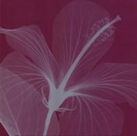 Hibiscus/Silver (Sm) Fine-Art Print