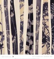 Botanica 2 Fine-Art Print
