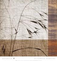 Botanica 7 Fine-Art Print
