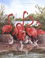 Flamingo 1 Fine-Art Print