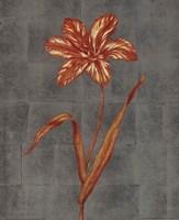 Orange Flower - full bloom Fine-Art Print