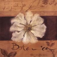 White Flower (brown) Fine-Art Print