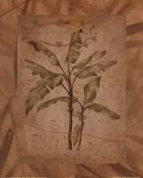 Leaves - brown Fine-Art Print