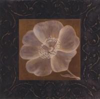 Tan Flower - full bloom Fine-Art Print
